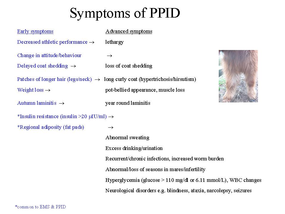 PPID - The Laminitis Site